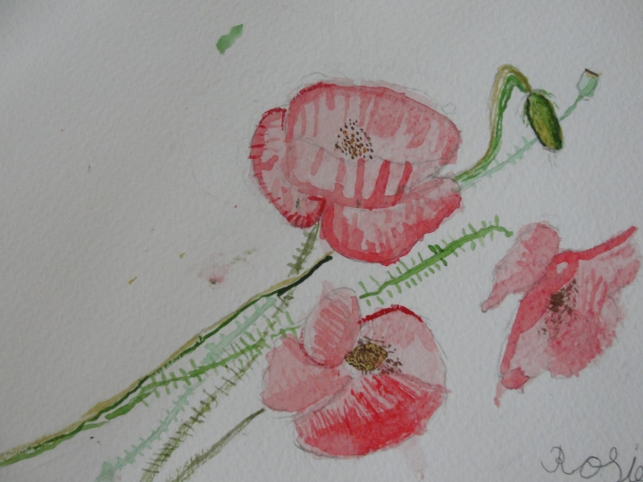 Poppies by Rose