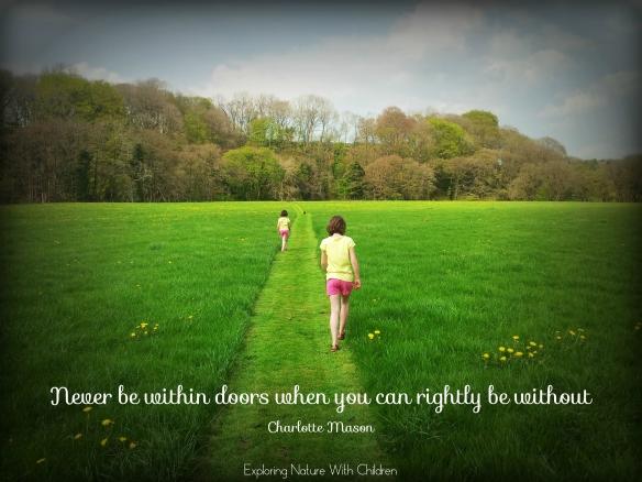 dandelion walk