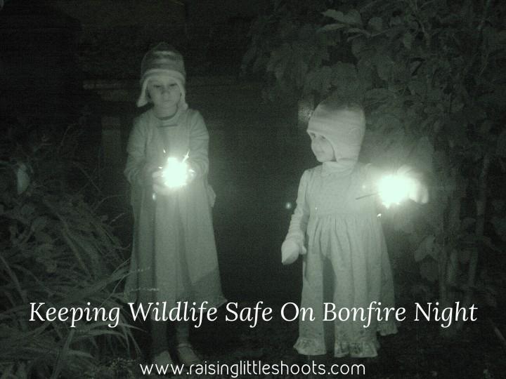 wildlife bonfire
