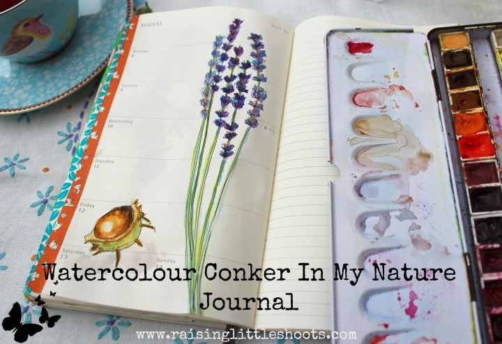 watercolour conker in my nature journal.jpg