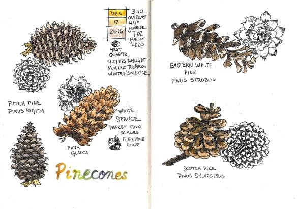 pinecones-2