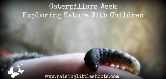 Caterpillars Week