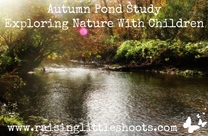 Autumn Pond Study.jpg